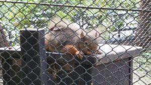 吉祥寺 井の頭自然文化園 200種以上の動物がいる隠れた名園