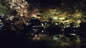 超穴場・紅葉ライトアップスポット 杉並区大田黒公園