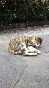 尾道 猫&寺社巡りざんまい旅行
