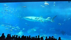 【沖縄】大人気の美ら海水族館 水槽カフェもオススメ