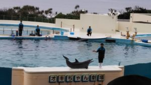 【沖縄】無料でイルカのショーが見られる!!海洋博公園