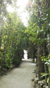 【沖縄】琉球の原風景に出合う 備瀬のフクギ並木