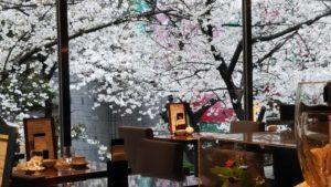 【八重洲】桜の絶景が楽しめる 穴場的フレンチレストラン カシュカシュ