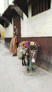 【モロッコ】フェズ 古代と現代が交錯する街(HISツアー8日間)